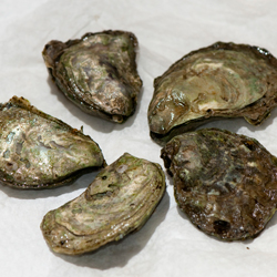 The State Shellfish